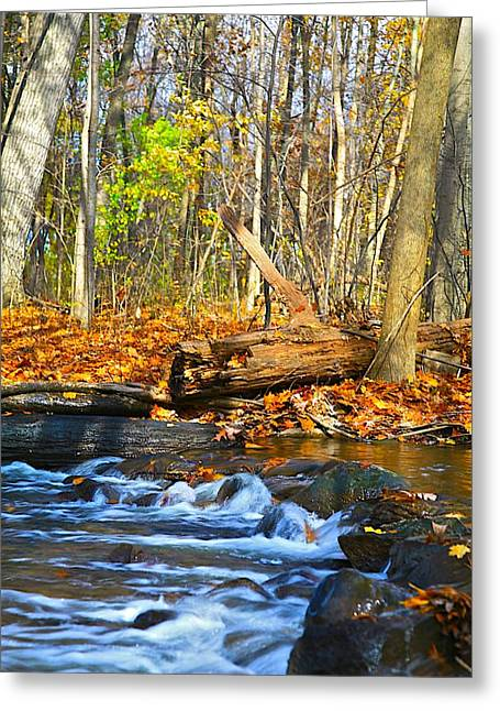 Blue Green Water Mixed Media Greeting Cards - The last of the fall color Greeting Card by Robert Pearson
