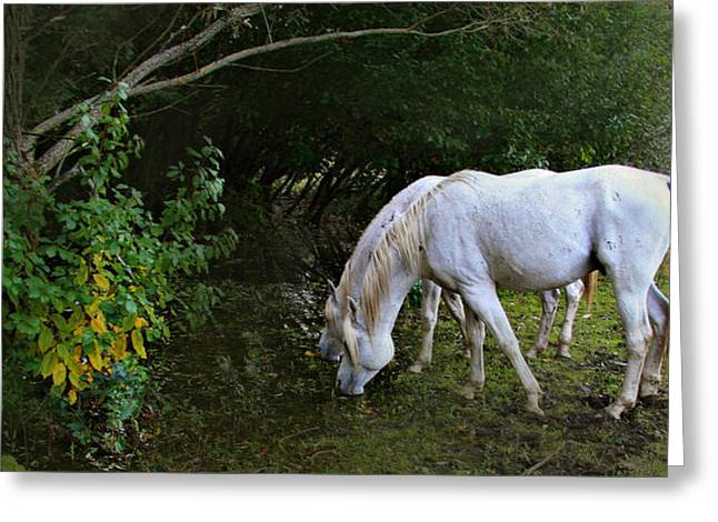 Horse Portrait Photographs Posters Greeting Cards - The Last Unicorns Greeting Card by El Luwanaya Arabians