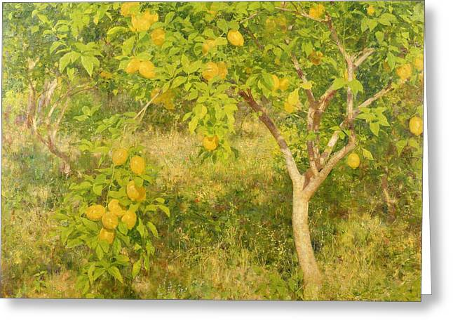 Vitamin Greeting Cards - The Lemon Tree Greeting Card by Henry Scott Tuke
