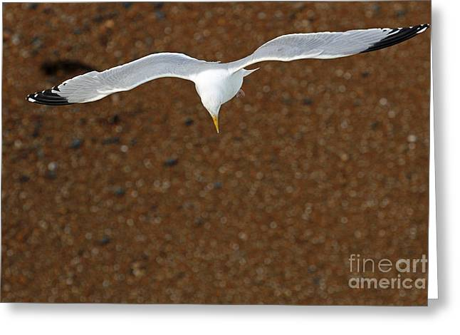 Flying Seagull Greeting Cards - The Lift Greeting Card by Urban Shooters