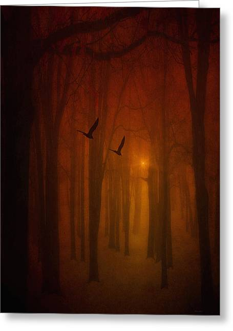 Framed Landscape Print Greeting Cards - The Light In The Forest Greeting Card by Tom York Images