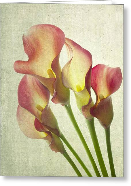 Cala Lily Greeting Cards - The Light Within Greeting Card by Rebecca Cozart