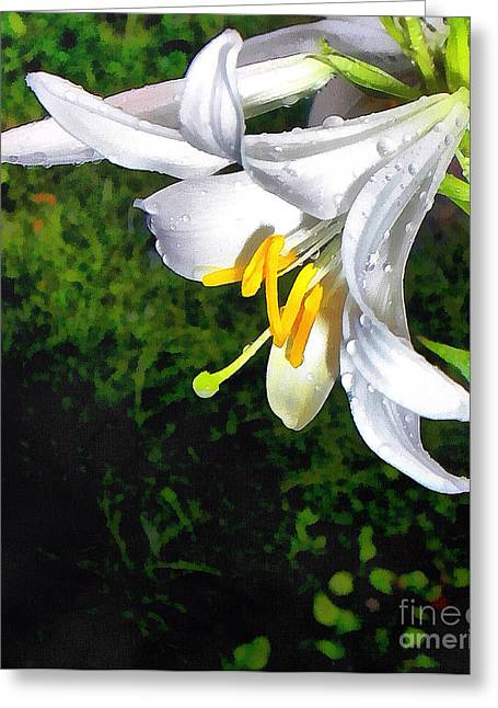 Sweating Greeting Cards - The lily Greeting Card by Odon Czintos