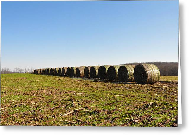 Hay Bales Greeting Cards - The Line Up Greeting Card by Bill Cannon
