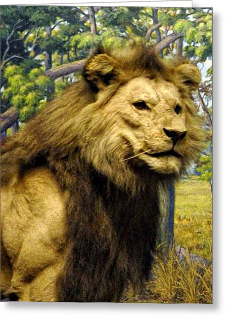 Lioness Greeting Cards - The Lion King Greeting Card by Bill Cannon