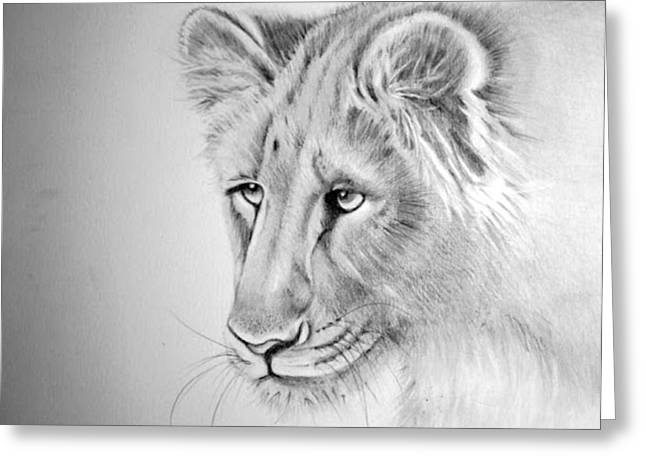 Lioness Drawings Greeting Cards - The Lioness Greeting Card by Barbra Joan