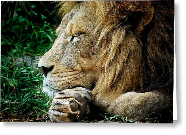 Michelle Wrighton Greeting Cards - The Lions Sleeps Greeting Card by Michelle Wrighton