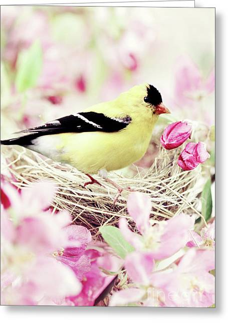 Pink Flower Branch Greeting Cards - The Little Finch Greeting Card by Stephanie Frey