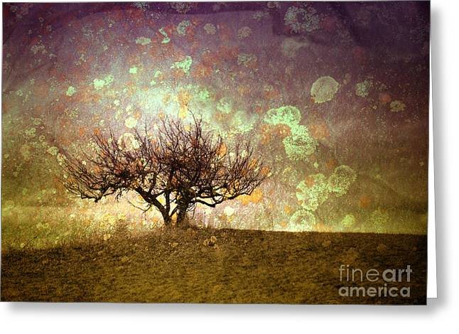 Tara Turner Greeting Cards - The Lone Tree Greeting Card by Tara Turner