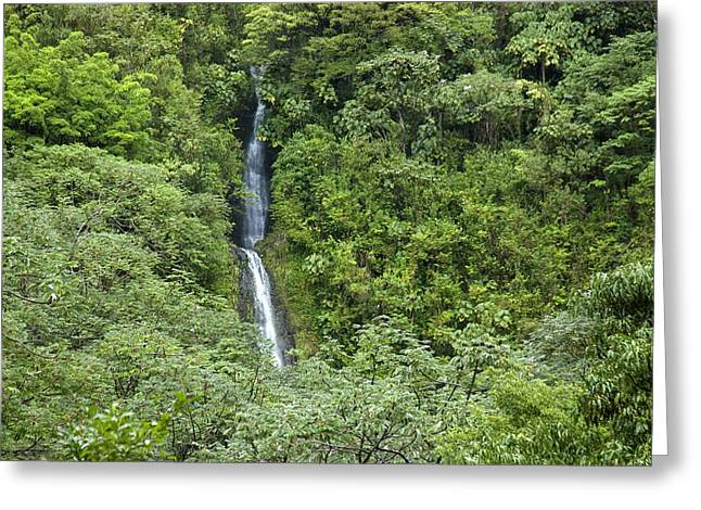 Manoa Falls Greeting Cards - The Manoa Falls Waterfall In Honolulu Greeting Card by Stacy Gold