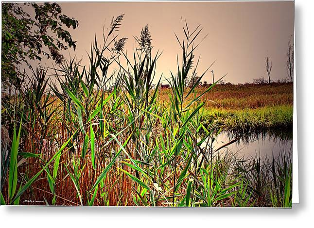 Mikki Cucuzzo Greeting Cards - The Marsh Greeting Card by Mikki Cucuzzo
