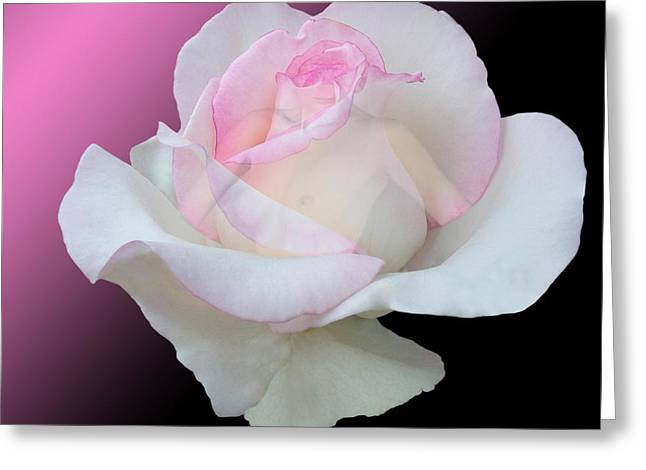 Floral Digital Art Digital Art Greeting Cards - The Mask Greeting Card by Torie Tiffany