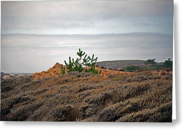 Point Lobos Greeting Cards - The Meadow Greeting Card by Harvey Barrison