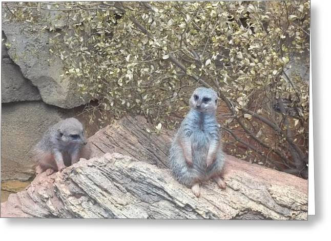 Brianna Greeting Cards - The Meercats Greeting Card by Brianna Thompson