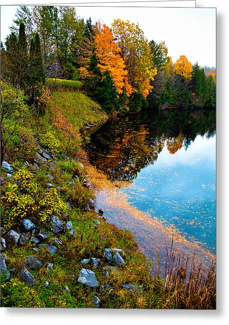 Fir Trees Greeting Cards - The Moose River in Old Forge New York Greeting Card by David Patterson