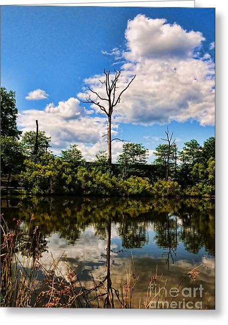 Spirt Greeting Cards - The naked tree Greeting Card by Paul Ward