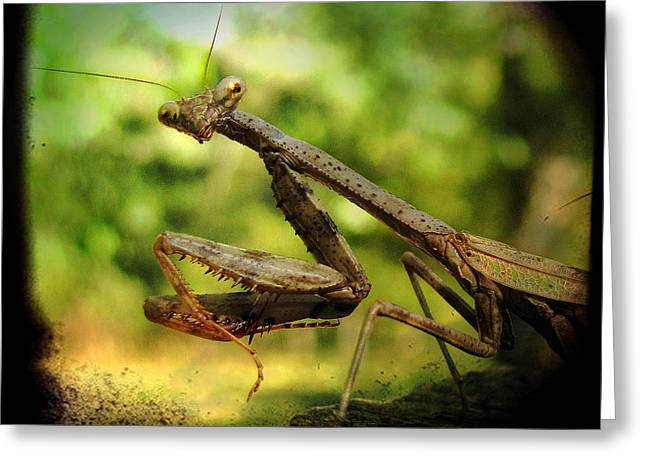 Mantises Greeting Cards - The Observer Greeting Card by Amy Tyler