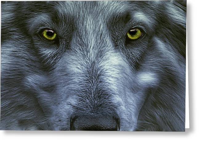 Wolf Face Greeting Cards - The Old Grey Wolf Greeting Card by Joachim G Pinkawa