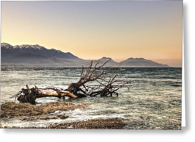 Aotearoa Greeting Cards - The old tree trunk Greeting Card by Andreas Hartmann