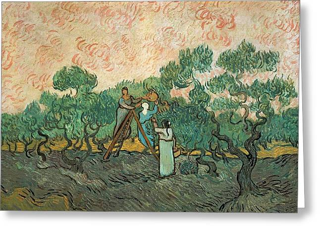 Crops Paintings Greeting Cards - The Olive Pickers Greeting Card by Vincent van Gogh