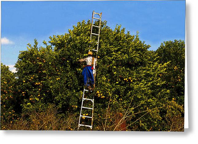 Picking Digital Art Greeting Cards - The Orange Picker Greeting Card by David Lee Thompson