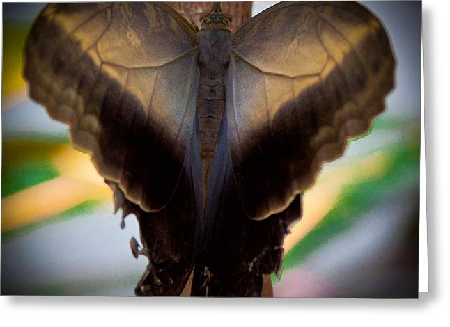 David Patterson Greeting Cards - The Owl Butterfly with a lot of Heart Greeting Card by David Patterson