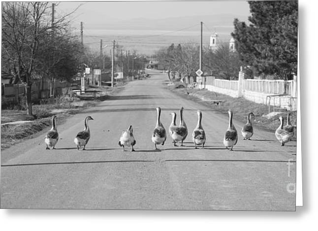 Flock Of Geese Greeting Cards - The owners of the road Greeting Card by Gabriela Insuratelu