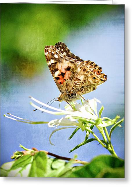 Painted Lady Butterflies Greeting Cards - The Painted Lady  Greeting Card by Saija  Lehtonen