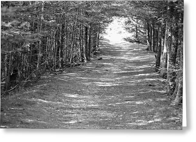Haunted Forest Greeting Cards - The Path Greeting Card by David Rucker