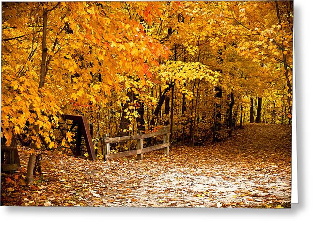Fallen Leaf Greeting Cards - The Path Less Traveled Greeting Card by Kamil Swiatek