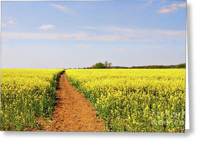 Sunnies Greeting Cards - The Path to Bosworth Field Greeting Card by John Edwards