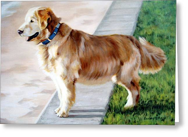 Sandra Chase Paintings Greeting Cards - The Patient Golden Greeting Card by Sandra Chase