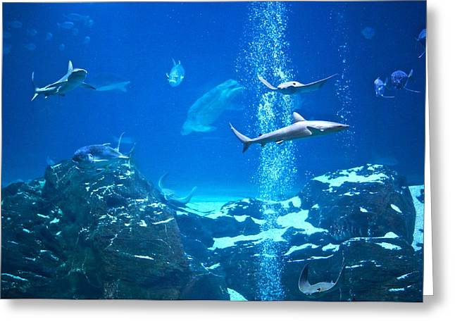 Peaceable Greeting Cards - The Peaceable Underwater Kingdom Greeting Card by Byron Varvarigos