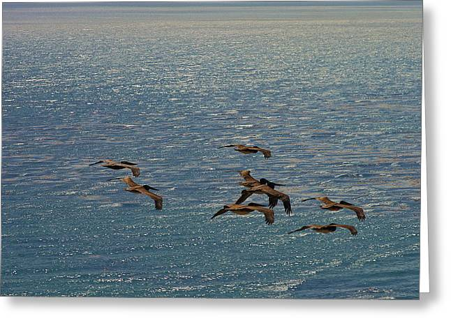 Best Sellers -  - Cliffs Over Ocean Greeting Cards - The Pelicans hunting Greeting Card by Viktor Savchenko