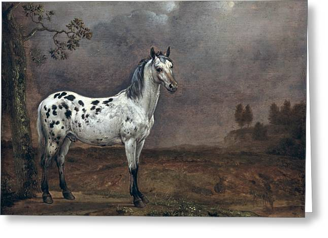 Wild Horse Greeting Cards - The Piebald Horse Greeting Card by Paulus Potter