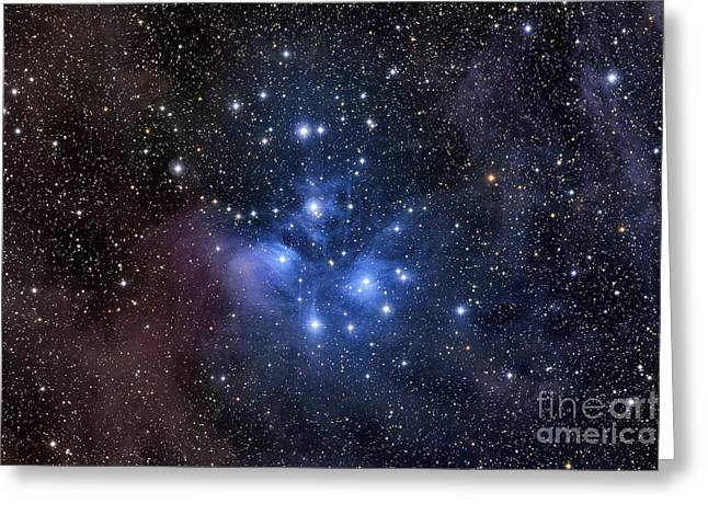 Stellar Greeting Cards - The Pleiades, Also Known As The Seven Greeting Card by Roth Ritter