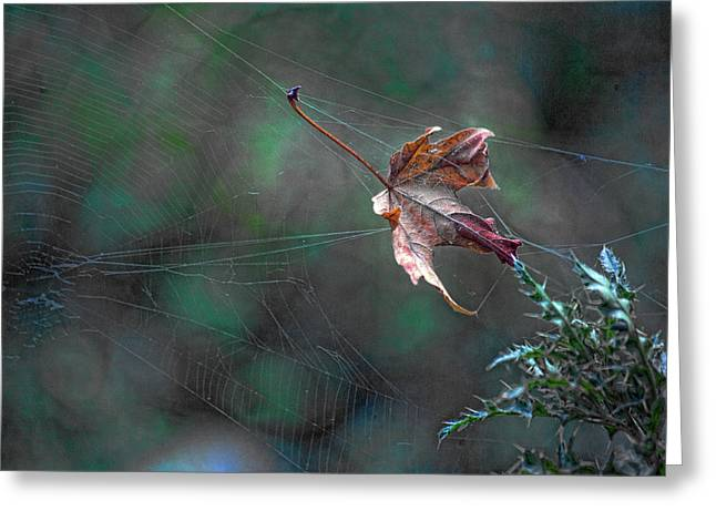 Spiderweb Art Greeting Cards - The Plot Thickens Greeting Card by Bonnie Bruno