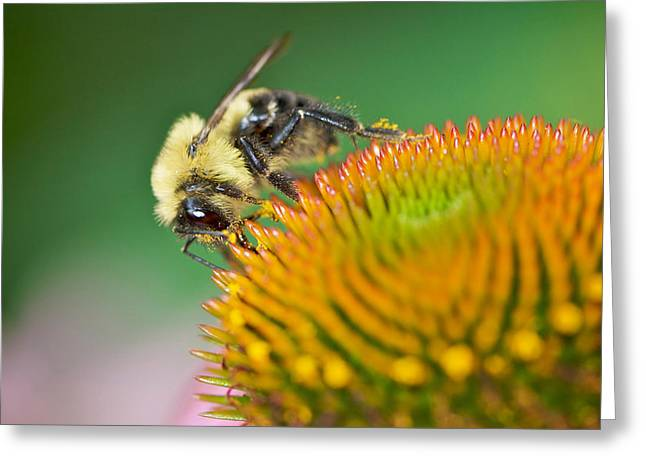 Transfer Greeting Cards - The Pollinator Greeting Card by Jarrod Erbe