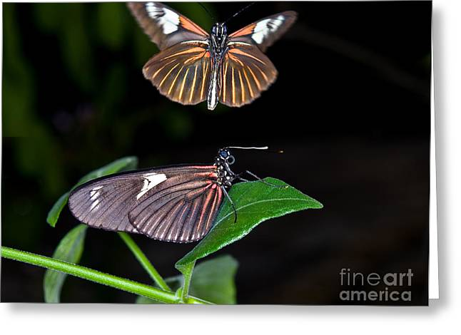 Postman Greeting Cards - The Postman Butterflies Greeting Card by Terry Elniski