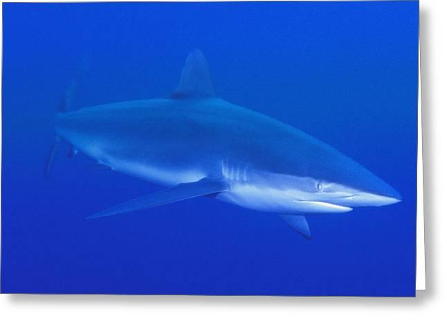 Ocean Predator Greeting Cards - The Predator Greeting Card by Carson Ganci