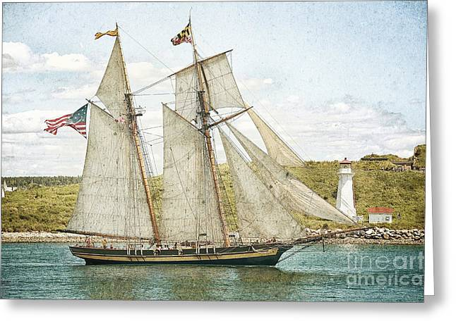 The Pride Of Baltimore In Halifax Greeting Card by Verena Matthew