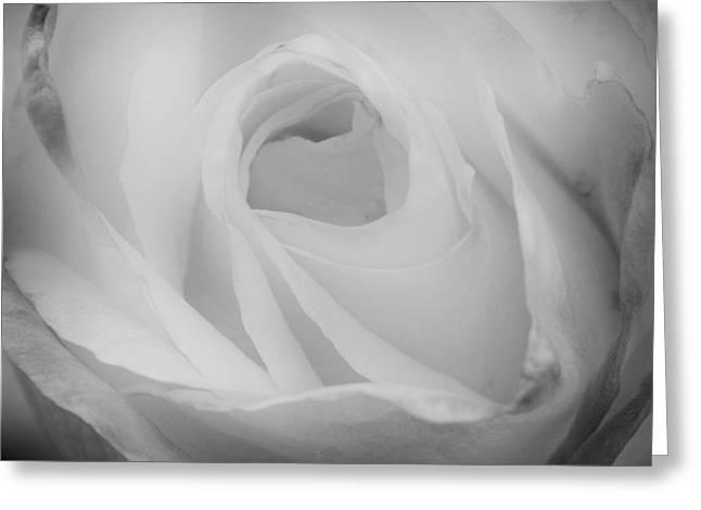 Princess Diana Greeting Cards - The Princess Diana Rose III Greeting Card by David Patterson