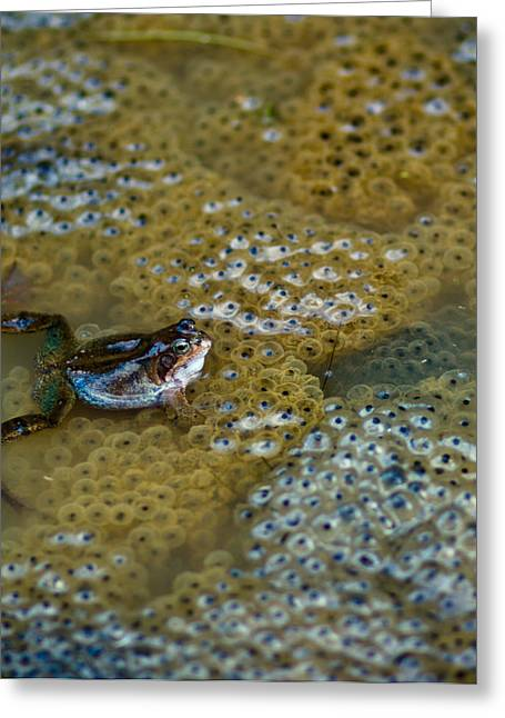Blue Green Water Greeting Cards - The Proud Parent Greeting Card by Justin Albrecht