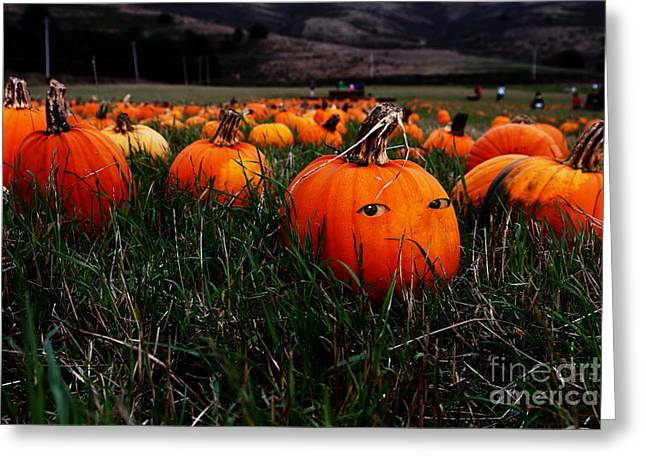 Half Moon Bay Greeting Cards - The Pumpkin Patch . When Nobody Is Looking Greeting Card by Wingsdomain Art and Photography