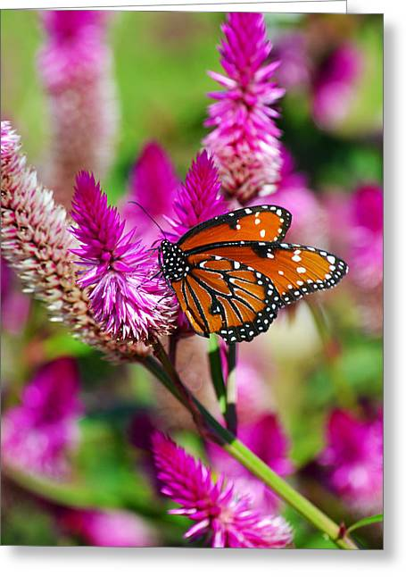 Queen Butterfly Greeting Cards - The Queen Greeting Card by Melanie Moraga
