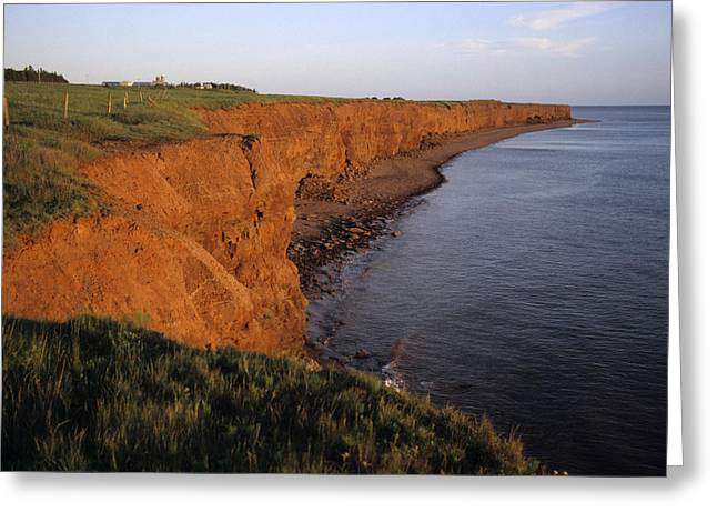 Princes Greeting Cards - The Red Cliffs Of Prince Edward Island Greeting Card by Taylor S. Kennedy