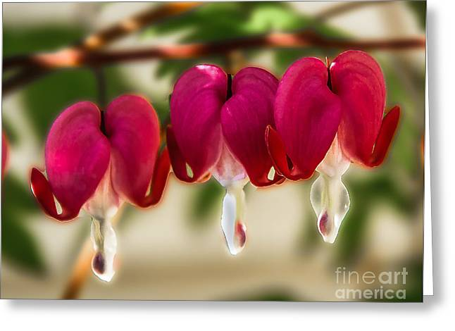 Dicentra Spectabilis Greeting Cards - The Red Heart Greeting Card by Robert Bales