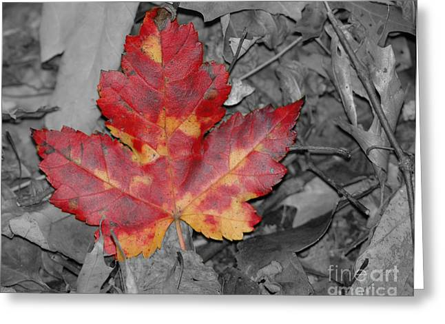 Ground Cover Greeting Cards - The Red Leaf Greeting Card by Paul Ward