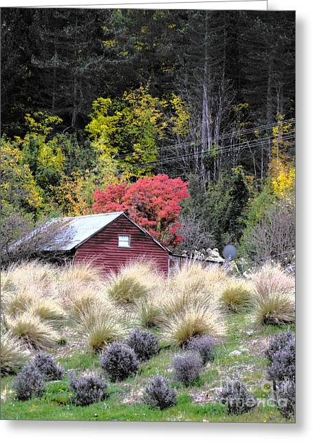 Shed Photographs Greeting Cards - The Red Shed Greeting Card by Karen Lewis