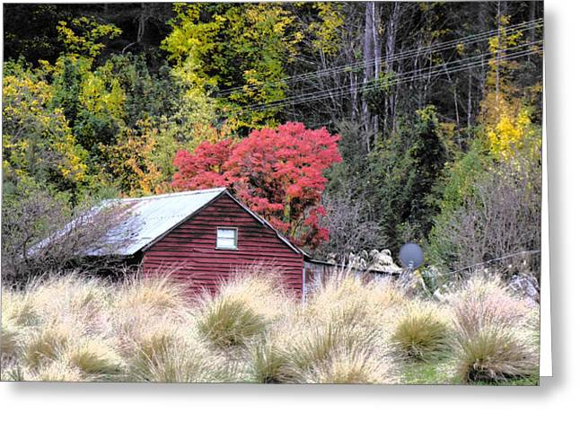 The Red Shed Greeting Card by Karen Lewis